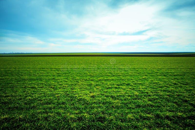 La hierba de la primavera crece en el campo imagenes de archivo