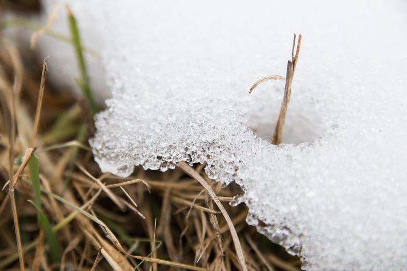 La hierba debajo de la nieve fotografía de archivo
