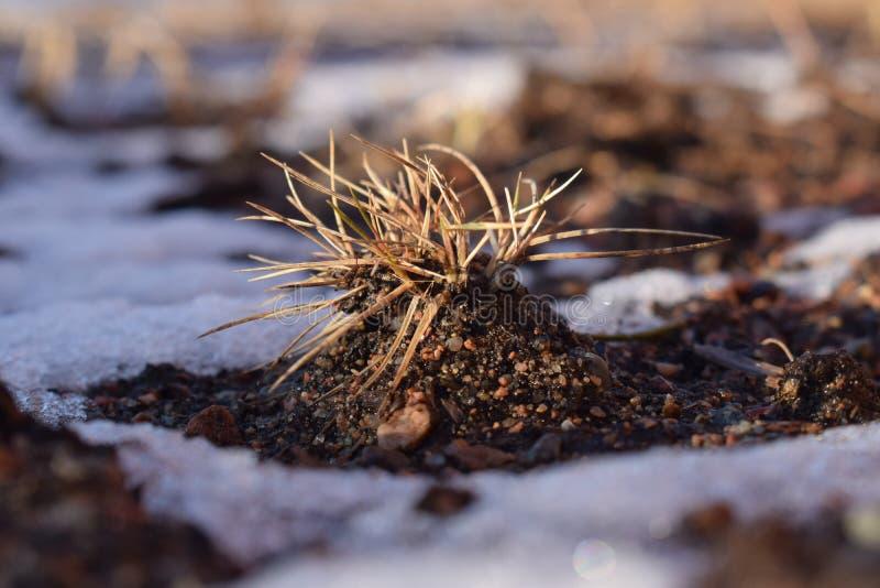La hierba del año pasado en la colina de la arena fotos de archivo libres de regalías
