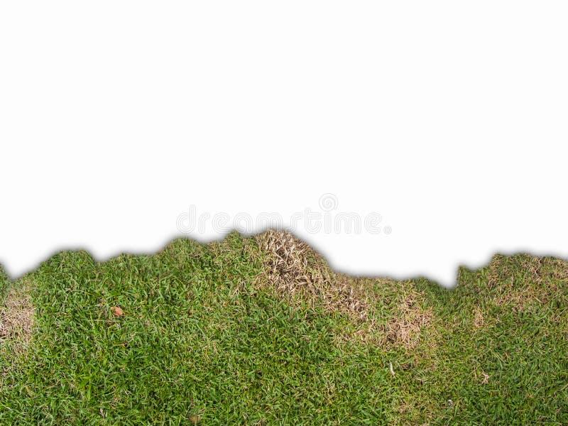 La hierba en el borde inferior del bastidor, backgorund aislado foto de archivo libre de regalías