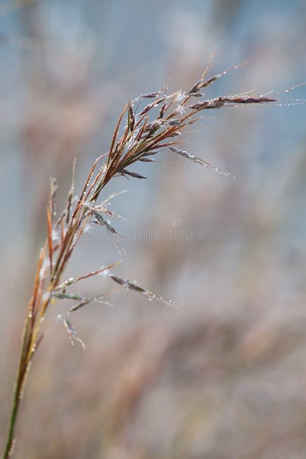 La hierba salvaje delicada hizo excursionismo en el sol de la madrugada con el bokeh fotografía de archivo