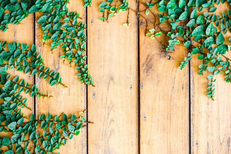 La hierba verde de la primavera fresca y la planta de la hoja sobre el marrón de madera del tablón texturizan el fondo imagenes de archivo