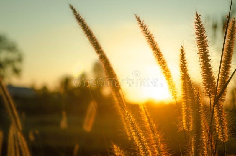 La hierba y el sol están cayendo imagen de archivo