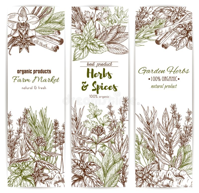 La hierba y la especia bosquejan la bandera del condimento orgánico libre illustration