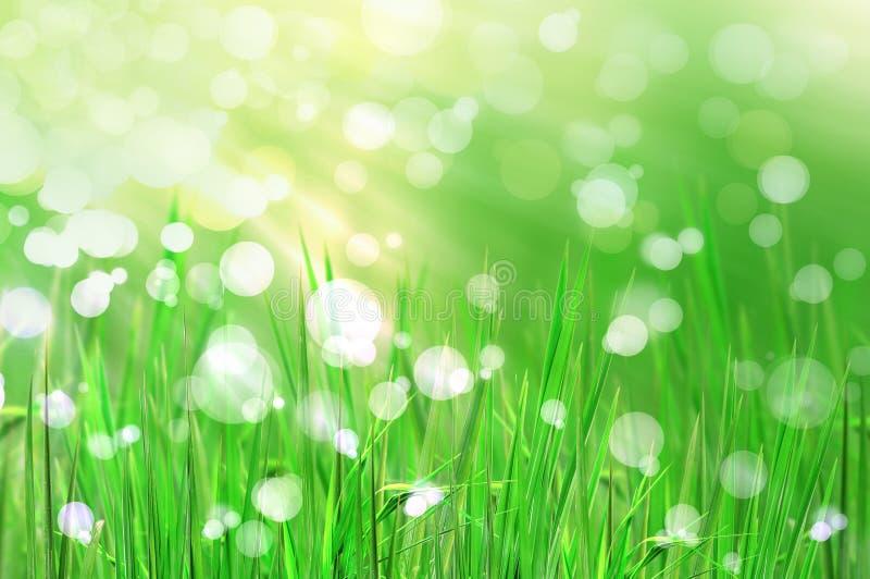 La hierba y la luz frescas hermosas reflejan por mañana stock de ilustración
