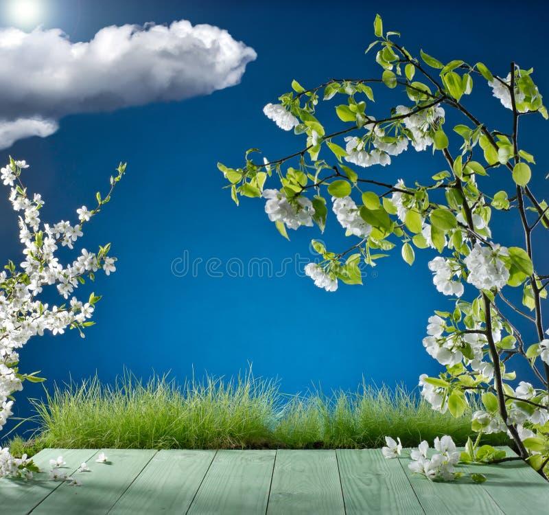 La hierba y la manzana florecen en el fondo del cielo azul fotografía de archivo libre de regalías