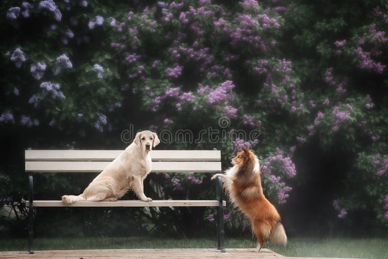 La historia de amor de dos perros fotografía de archivo