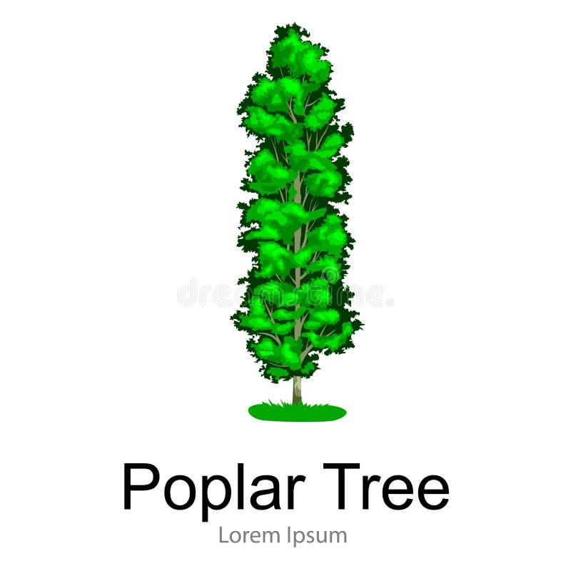 La historieta aisló el árbol en un icono blanco del fondo, parque al aire libre del verano del álamo con la rama, hojas en vector stock de ilustración
