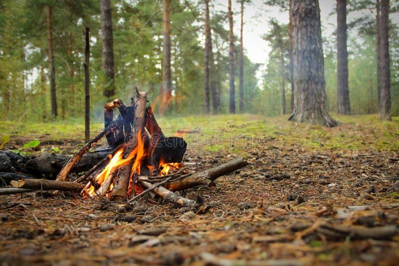 La hoguera en el bosque del pino imagenes de archivo