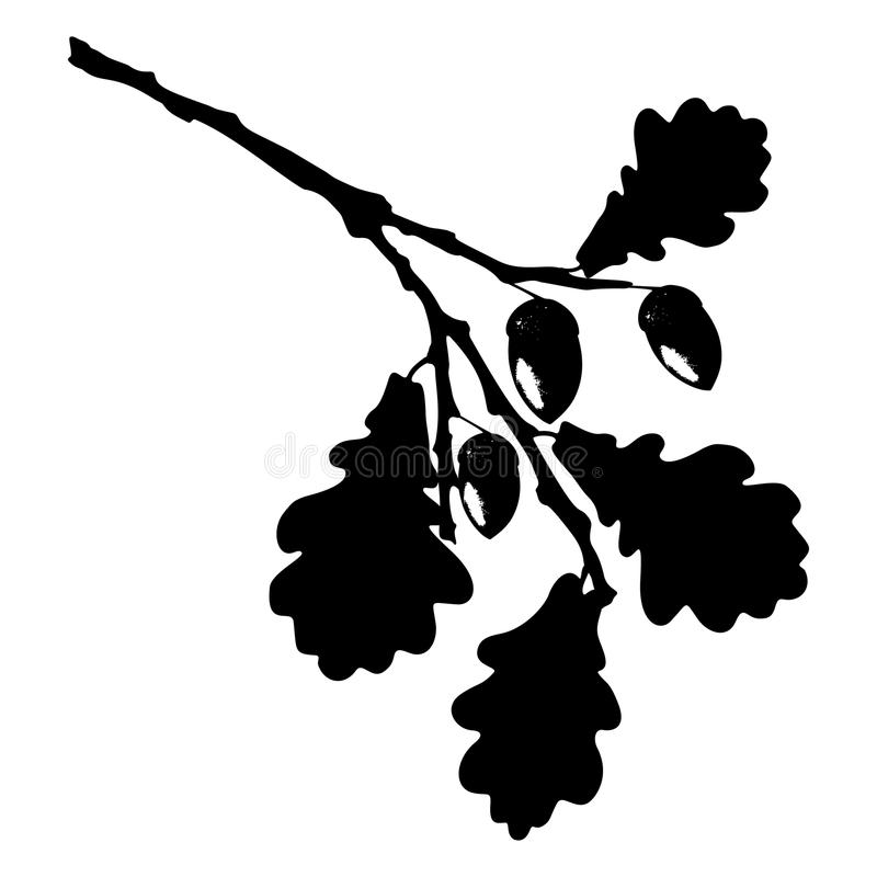 La hoja, la bellota y la rama del roble aislaron la silueta, ecología estilizada ilustración del vector