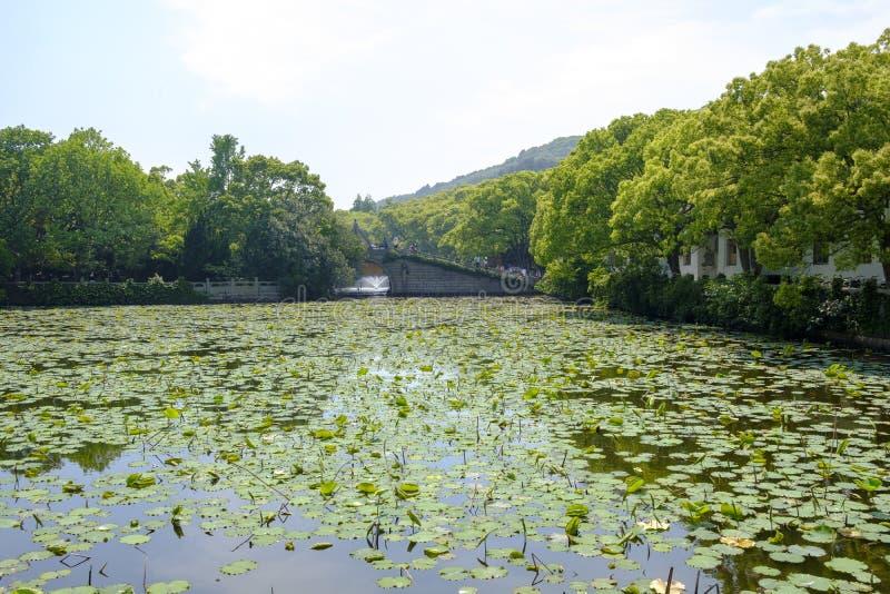 La hoja de Lotus cubri? la charca debajo del sol foto de archivo libre de regalías
