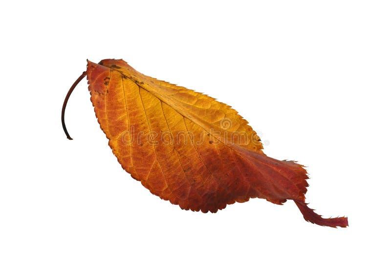La hoja del otoño aisló fotografía de archivo