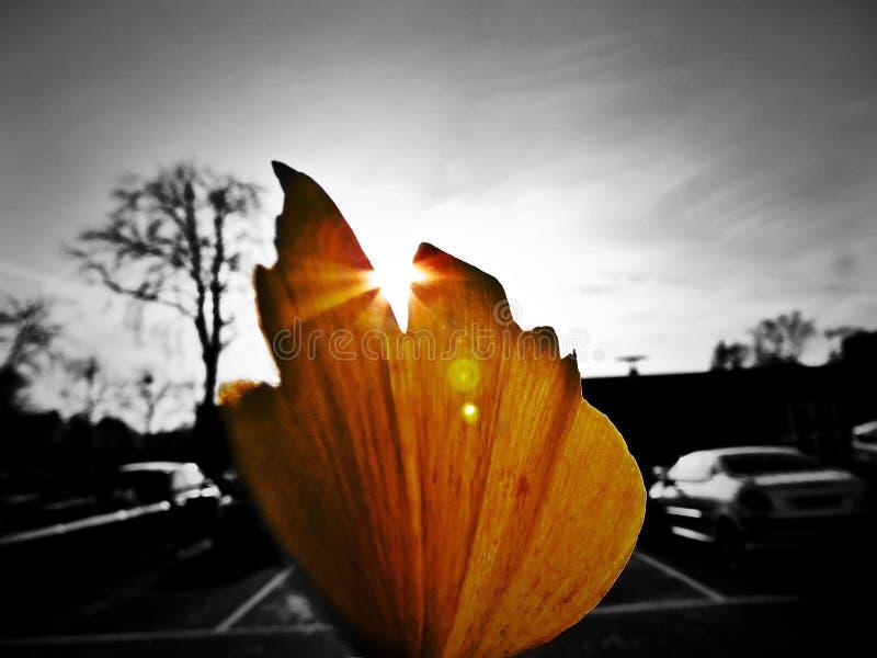 La hoja pasada del otoño fotografía de archivo libre de regalías