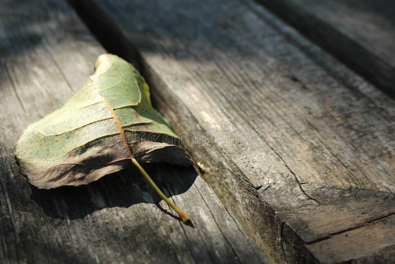 La hoja seca en tablones de madera rústicos, viejos emerge Fondo melancólico de la llegada del otoño y de la caída con el copyspa foto de archivo libre de regalías