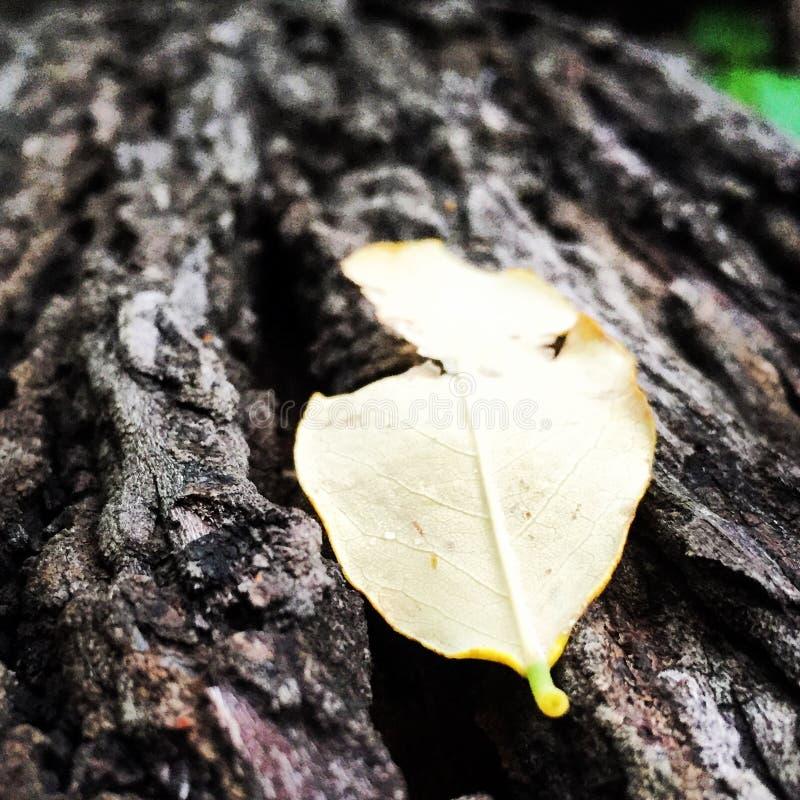 La hoja solitaria en el bosque fotos de archivo libres de regalías