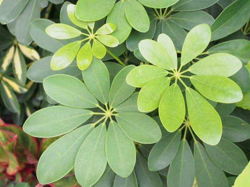 La hoja verde está floreciendo en el jardín foto de archivo libre de regalías