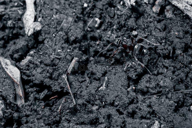 La hormiga es primer imagen de archivo