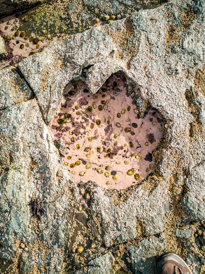 La huella rara del dinosaurio del tracksite sauropod-dominado del nam Brathairean, hermanos de Rubha señala - la isla de Skye fotos de archivo