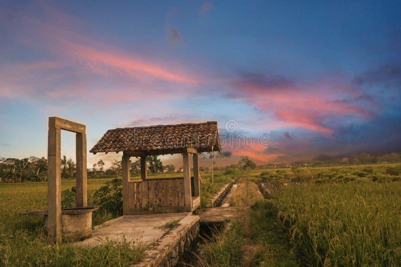 La hutte de l'agriculteur près du puits au milieu des gisements de riz photo libre de droits