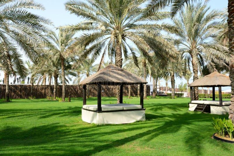 Image result for relaxer dans les palmier