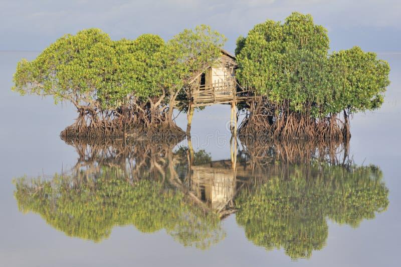 La hutte du pêcheur parmi des palétuviers photos stock