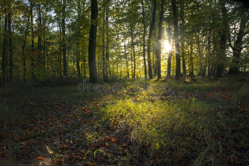 La igualación del sol brilla a través de los árboles en un claro en un verde oscuro imagenes de archivo