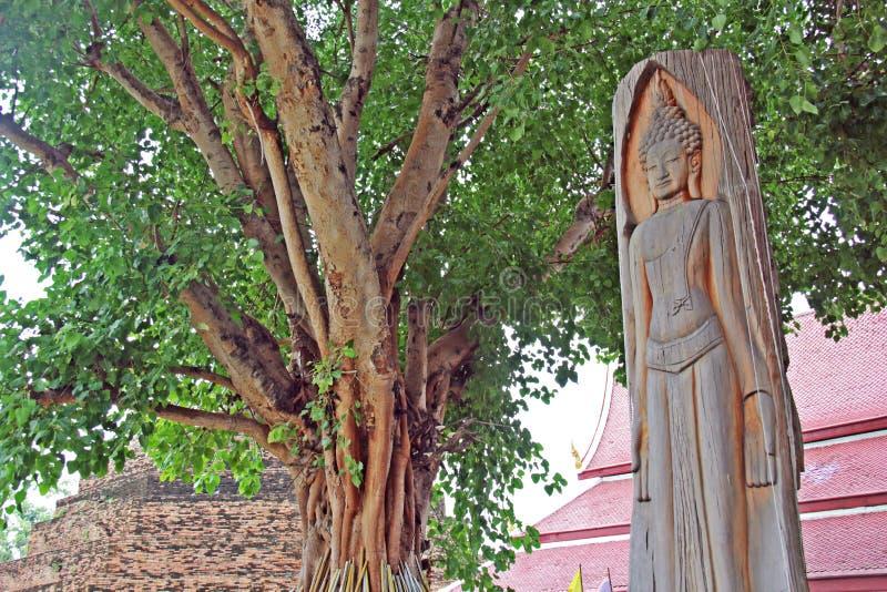 La imagen Buda talló con madera en templo dentro del árbol verde grande fotos de archivo libres de regalías
