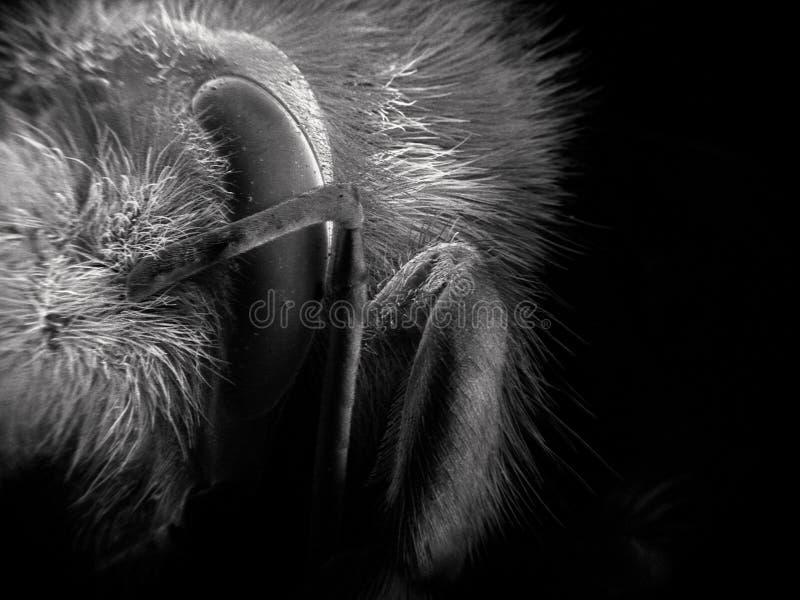 La imagen de la exploración del electrón de manosea la abeja foto de archivo