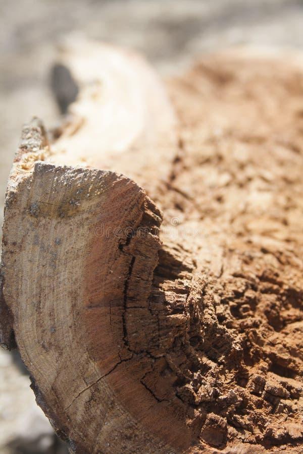 La imagen del primer del polvo de madera putrefacto Brown decay? el registro imagen de archivo libre de regalías