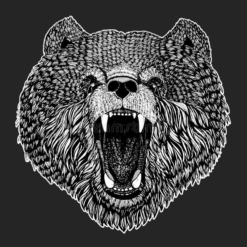 La imagen salvaje del vector del oso para el tatuaje, camiseta, carteles da el ejemplo exhausto stock de ilustración