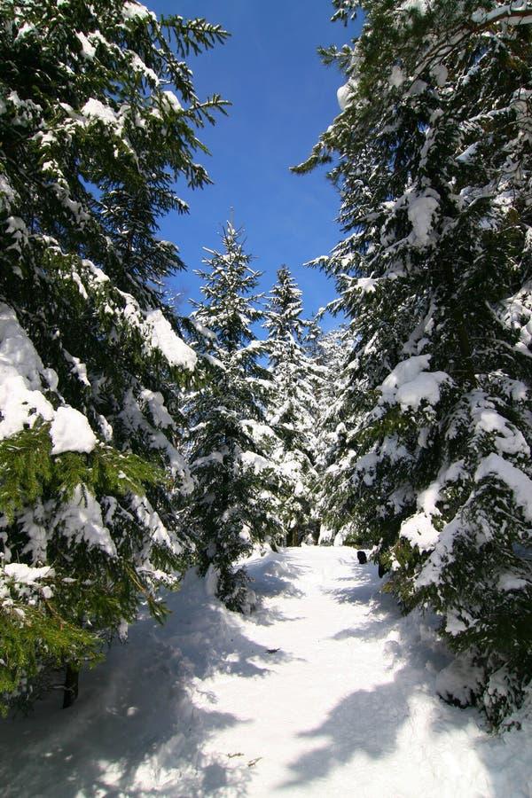 La inverno-vista fotografia stock