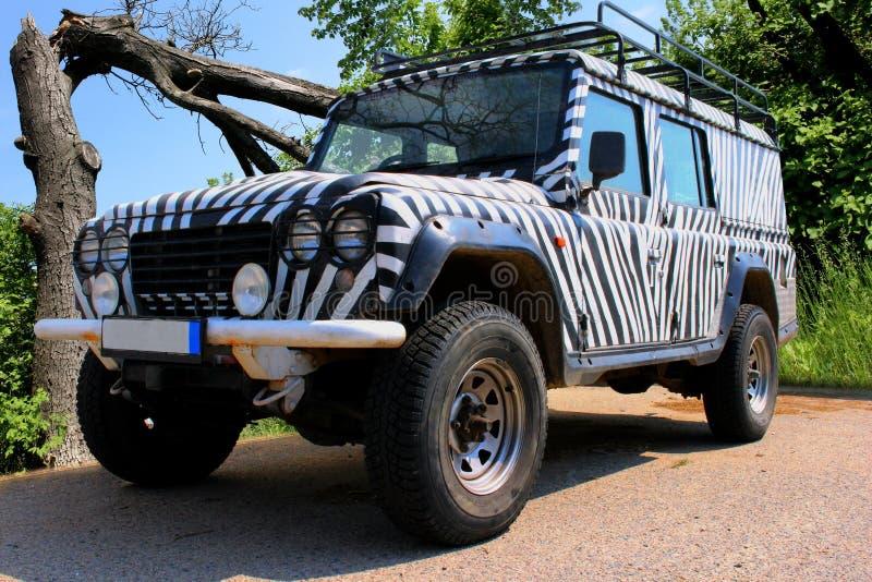 La jeep di safari con un modello della zebra guida attraverso una bella natura in pieno degli alberi e dei cespugli di un parco n immagini stock libere da diritti