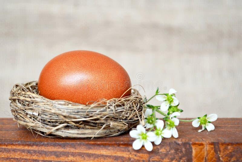 La jerarquía de Pascua con el huevo marrón y la primavera blanca florece imagen de archivo libre de regalías