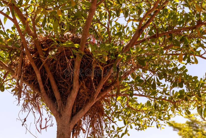 La jerarquía del pájaro en el árbol en el jardín fotografía de archivo
