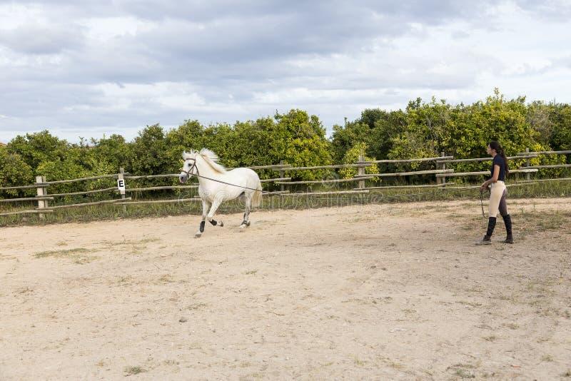La jeune femme aux cheveux foncés mince dans l'équitation vêtx exercer son cheval blanc sur l'avance image libre de droits