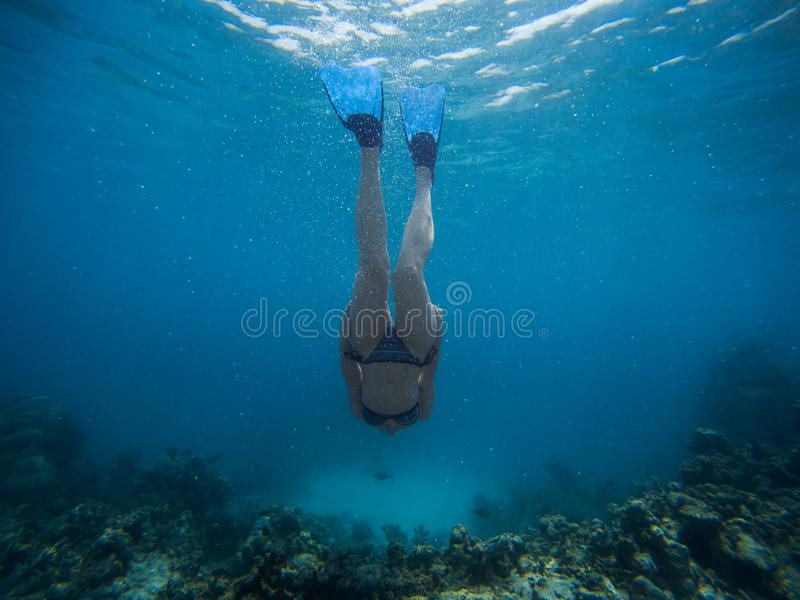La jeune femme de Freediver nage sous l'eau avec la prise d'air et les nageoires photos libres de droits