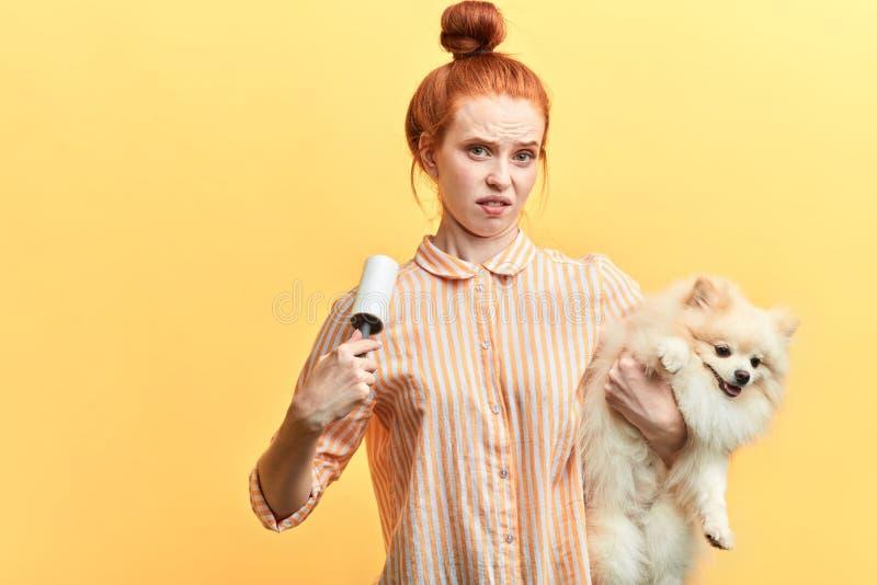 La jeune femme fâchée avec le hairbun utilise un rouleau de fibre pour enlever les poils photos stock