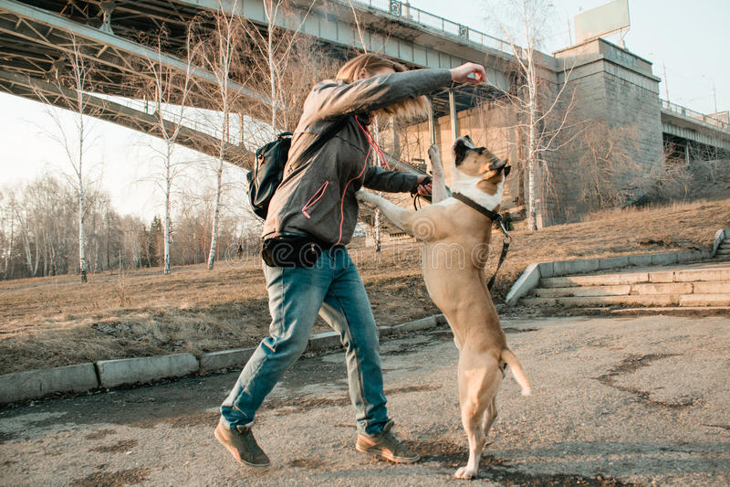 La jeune femme forme son chien en parc de soirée photographie stock