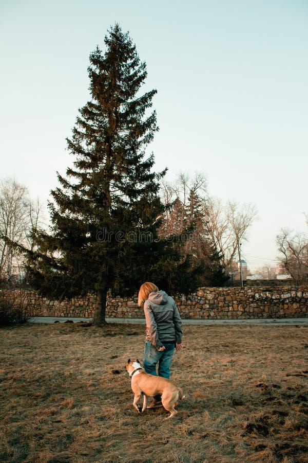 La jeune femme forme son chien en parc de soirée photos libres de droits