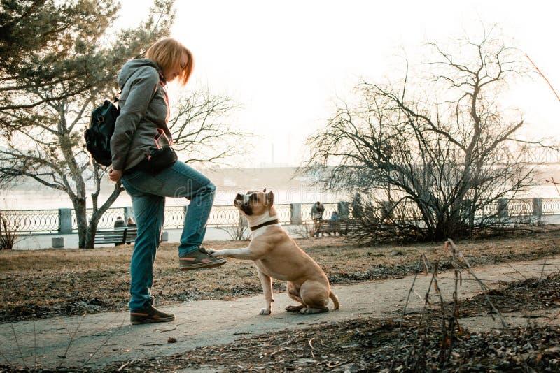 La jeune femme forme son chien en parc de soirée images libres de droits