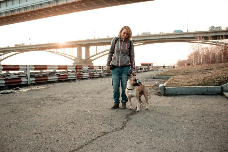 La jeune femme marche avec son chien en parc de soirée images libres de droits