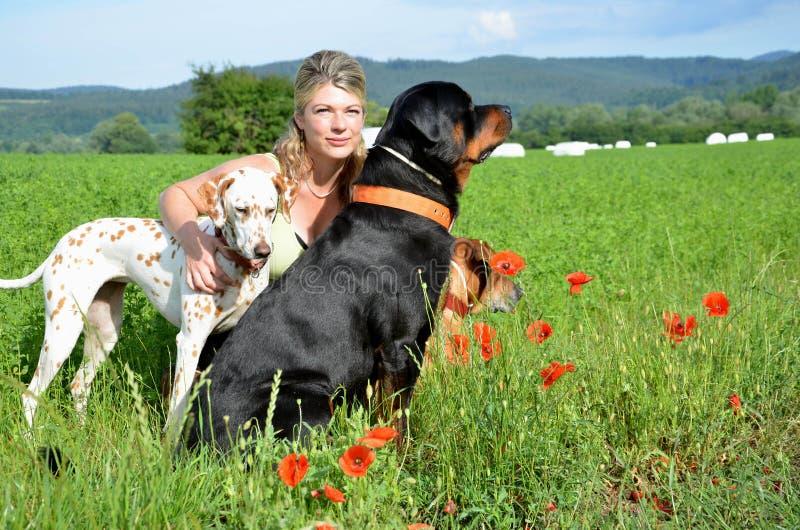 La jeune femme pose avec ses grands chiens sur le pré vert images libres de droits