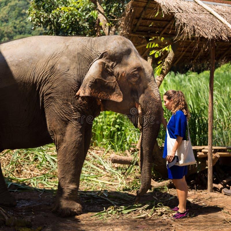La jeune fille prend soin d'un éléphant dans un sanctuaire dans la jungle de Chiang Mai image libre de droits