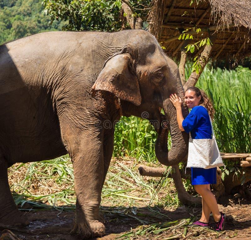 La jeune fille prend soin d'un éléphant dans un sanctuaire dans la jungle de Chiang Mai photo stock