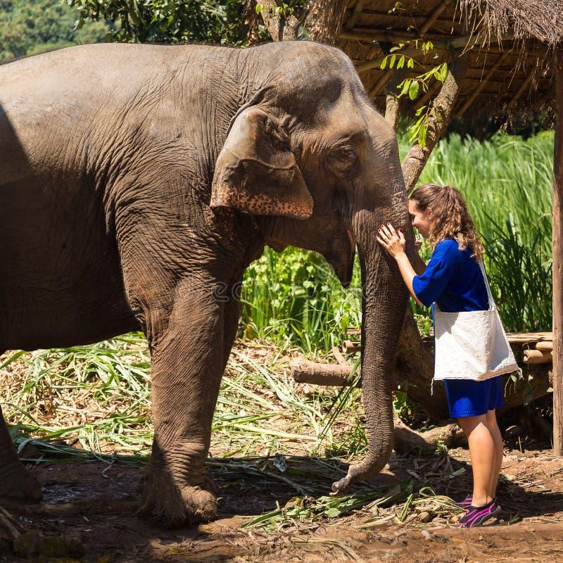 La jeune fille prend soin d'un éléphant dans un sanctuaire dans la jungle de Chiang Mai images stock