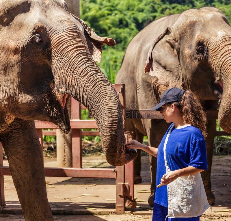 La jeune fille prend soin des éléphants à un sanctuaire dans la jungle de Chiang Mai photo stock