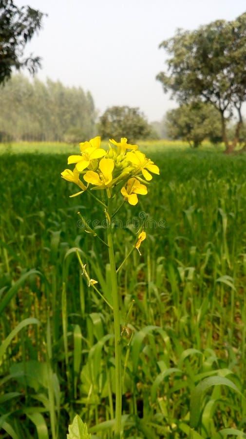 La jeune fleur photos libres de droits