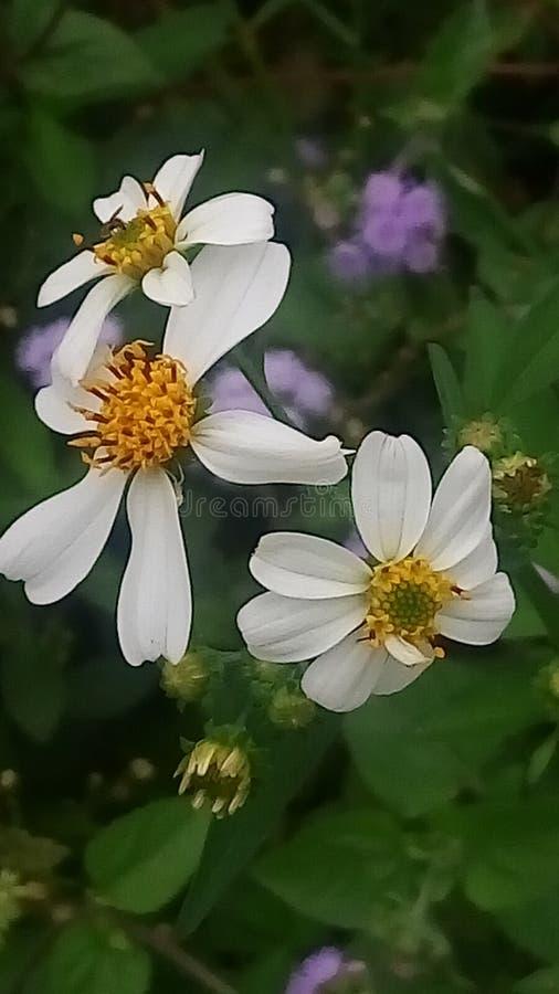 La joie des fleurs photographie stock