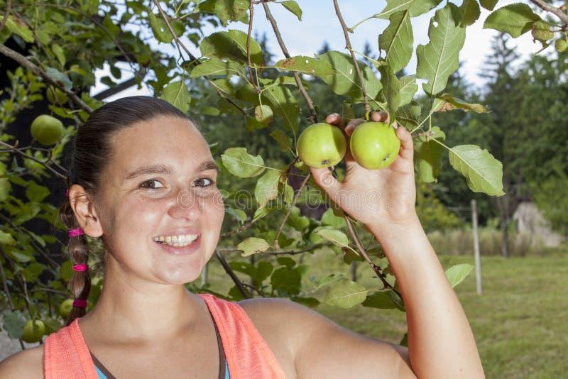 La jolie femme recueillant les pommes organiques vertes avec la cueillette collent photographie stock libre de droits