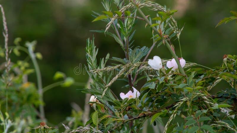 La jolie fleur voient tout en marchant sur la forêt images libres de droits